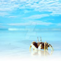 Crab on the tropical beach I by MotHaiBaPhoto