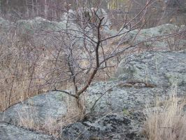 tree and stone by malicia-stock
