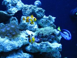 Finding Nemo by geshorty34