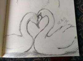 daily drawing challenge day 34: Swans by Chayt