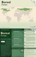 Boreal Forest by plaxx