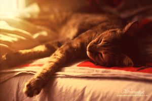 summer sleep. by Chervonnaya