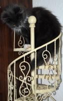 Loki Climbing My Spiral Staircase by Forestina-Fotos