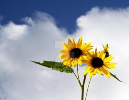 Sunflowers by EmaleeAnne