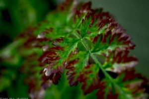 Green and Maroon-ish Weed by M-L-Griffith