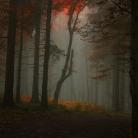 -Enlightenment of secret- by Janek-Sedlar