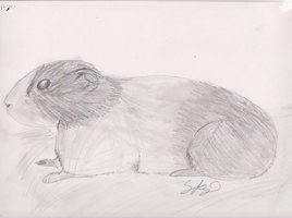 I drew a guinea pig :p by pungender