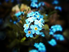 .:.Forget me not.:. by Ailedda