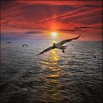 Flight..... by my-shots