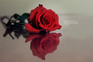 Every rose as its thorn... by foreveralive-photo