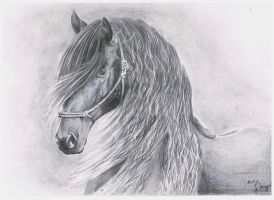 Friesian Horse by Nyrine