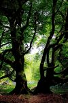 Giants - Castramon Wood, Scotland by Coigach