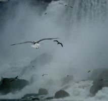 Birds in the Falls by Zilch17