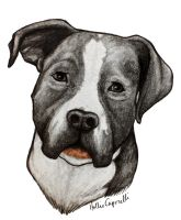 Pitbull Commission by HollieBollie