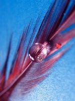 Feather by Doodoox
