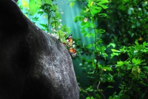 Butterflies beside a rock by SaajidAkram