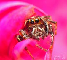 Jumper on Pink by Enkased