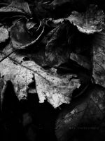 leaf Black and white by noxyzz