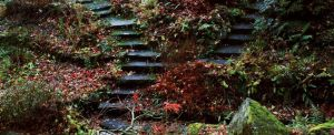 autumn steps by GreenDragon42