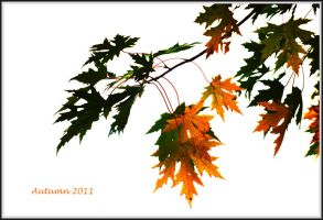 Autumn 2011 by Tailgun2009