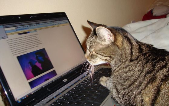 The Web-surfing Cat by insane808