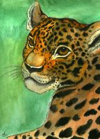 Jaguar by Miss-Melis