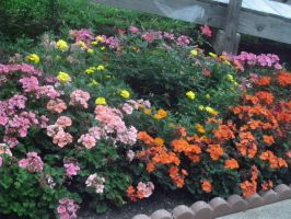 Flower Bed by AceOfStCanardKLy