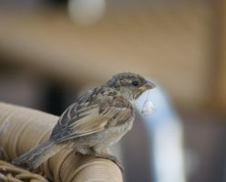 sparrow-nest builder-permission required for usage by scratzilla
