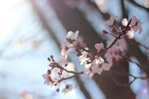Spring Light by AtomicBrownie