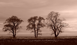 Three Sisters sepia by chibiamy