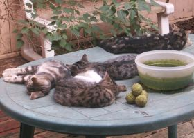 Another cat day of summer by Ripplin