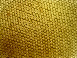 honeycomb stock by Mihraystock