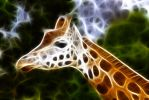 Fracted Giraffe by Byrek