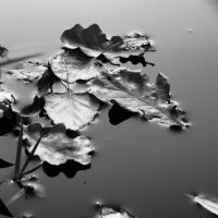 Autumn leaves on water III by voidcontext