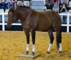 STOCK - 2014 Total Equine Expo-20 by fillyrox