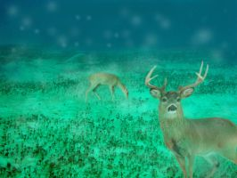 Deer In The Sea by leKir