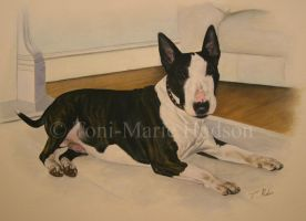 Conan - English Bull Terrier by Canis-Lupess