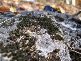 Moss on the rock. by The-Satchmoe