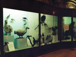 Natural History Museum birds by LTKJJ
