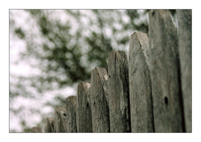 Fence 2 by MichelleMarie