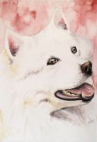 Watercolor work - dog by mooni