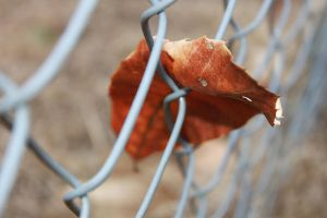 Leaf in a Fence by firegal01
