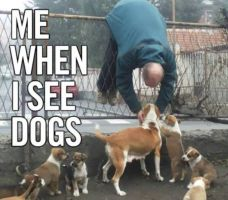 Me when I see dogs by Femke567