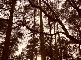 Sam Houston Trees by kAoTiCwOnDeR