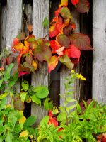 Touch of Fall IV by TriciaStucenski