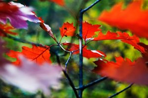 autumn colors by BrianWolfe