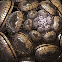 cocoon by ShaiHulud9