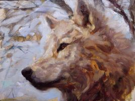 wolf by snellynell