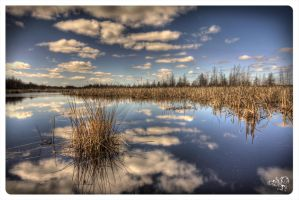 Mer Bleue Conservation area by AmirNasher