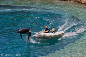 Dolphin 2... by Al-Msafer